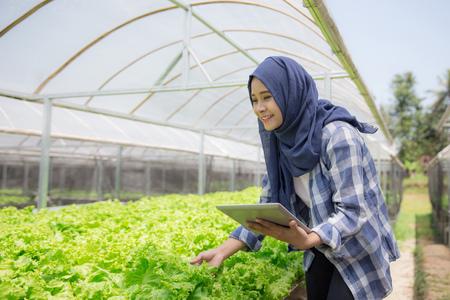 水耕農場での近代的な農業。タブレットを持つ若い女性農家