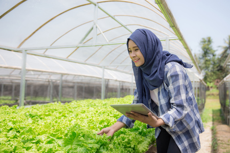 modern farming in hydrophonic farm. young female farmer with tablet