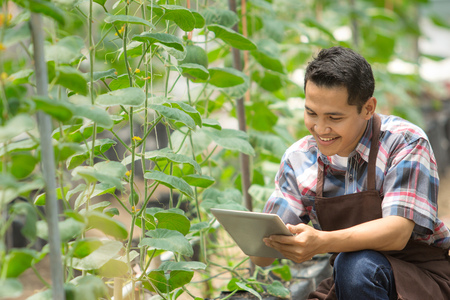 male farmer using tablet pc in green house. modern hydrophonic farming Stock Photo