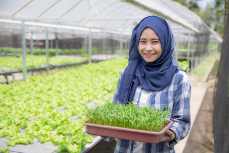 young muslim woman holding a small green plant. new life concept. hydrophonic farming