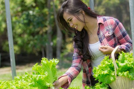 happy asian woman harvesting vegetable from her own hydrophonic farm Stock Photo