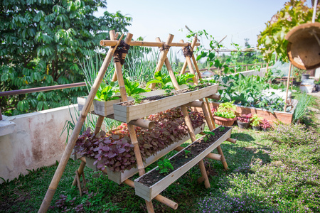 potrait of modern home urban farming in the small space of the building rooftop Foto de archivo