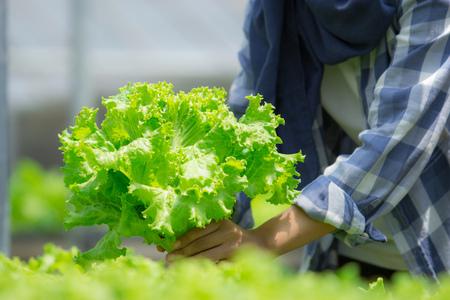 close-up van de hand oogsten van groente