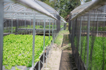 portrait of hydrophonic farm. modern farming concept Stock Photo
