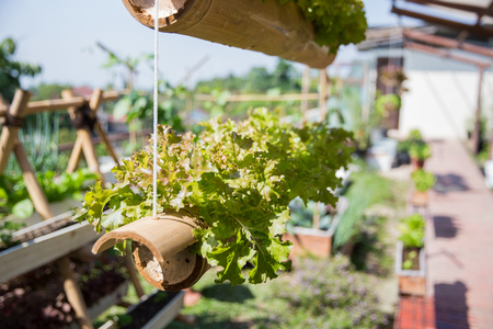 hydrophonic farming in small space over the building rooftop Banco de Imagens