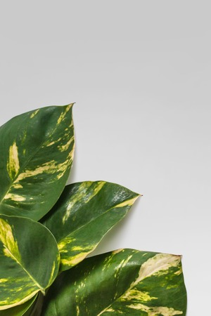 portrait of tropical leaves nature layout on grey background with copy space Banco de Imagens