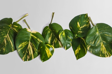 portrait of tropical leaves nature layout on grey background Stock Photo