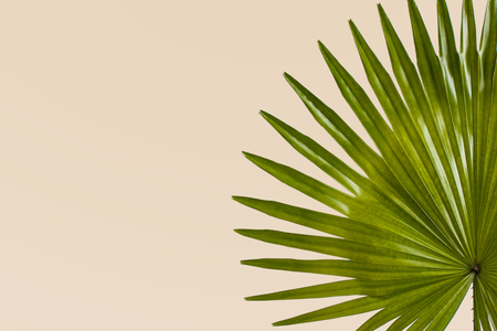 close up portrait of exotic tropical leaves on pastel creme background with copy space Imagens