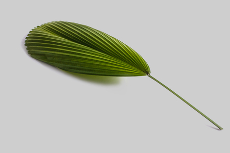 full portrait of green tropical leaves on grey background