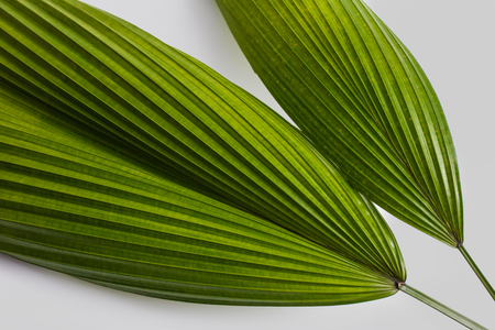 close up portrait of green tropical leaves on grey background