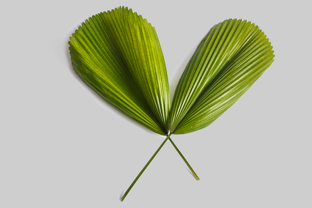 portrait of green tropical leaves on grey background Stock Photo