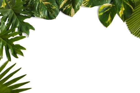 portrait of Creative nature layout made of tropical leaves isolated on white background with copy space Banco de Imagens
