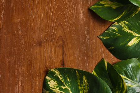 top view portrait of tropical leaves layout on wooden background with copy space