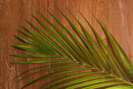 close up portrait of exotic tropical palm leaves on wooden background