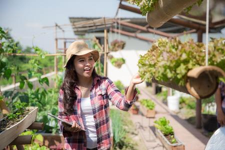 rooftop farm or garden