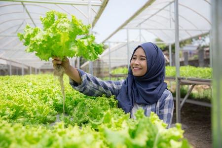 vrouw met sla staan in hydropohonic boerderij Stockfoto