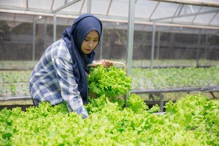vrouw oogsten van hydrofonische boerderij