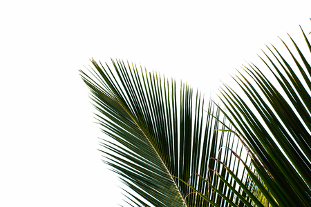 palm leaves isolated on white background Imagens