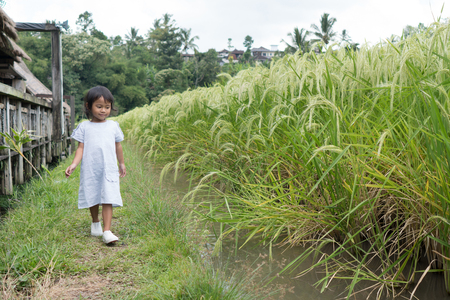 toddler walking in a paddy rice field