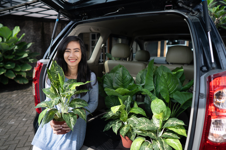 woman with plant and tree in her car trunk 版權商用圖片