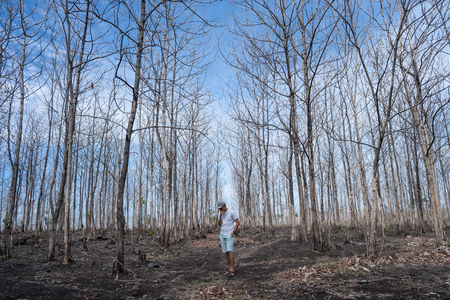 man walking in the wood with leafless tree Imagens - 115804429