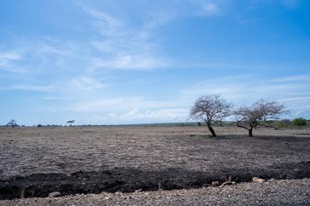 beautiful savanna landscape in Baluran Banyuwangi indonesia