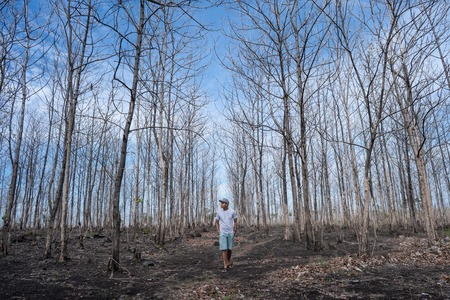male standing in the forest with leafless trees 写真素材