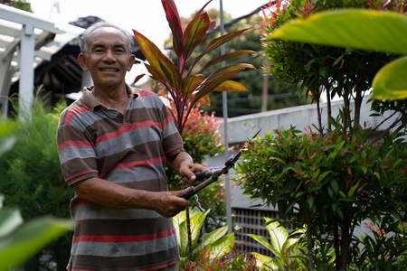 senior male asian gardening and trimming off leaf Stok Fotoğraf