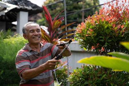 senior male gardener cutting some leaf
