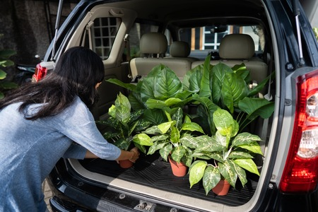 buying a new plant for the garden