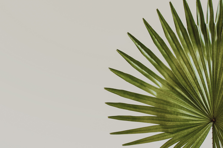 exotic tropical leaves on pastel creme background