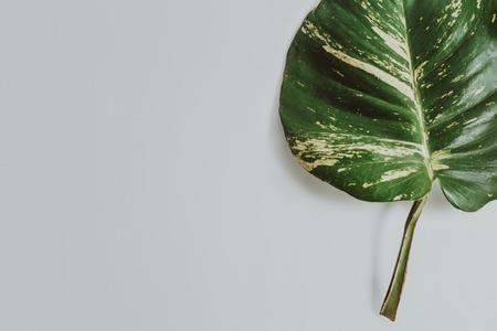 tropical leaves on grey background Banco de Imagens