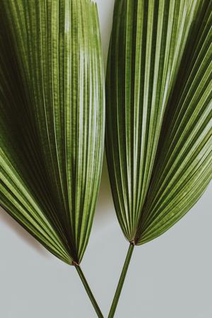 green tropical leaves on grey background 版權商用圖片