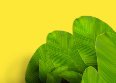 leaf layout with copyspace made of tropical leaves Imagens