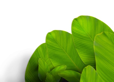 leaf layout with copyspace made of tropical leaves Banco de Imagens