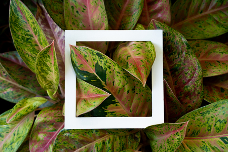 layout on plant texture pattern with creative space Stock Photo