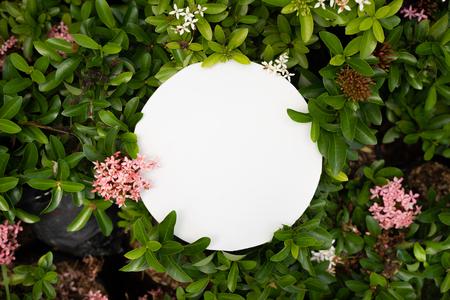 plant pattern tropical leaf background design