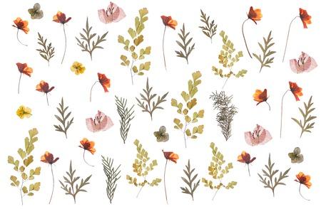 Motif de fleurs séchées pressées à plat isolé sur fond blanc