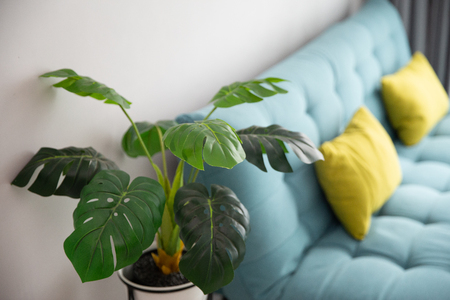 artificial monstera plant in living room Stock Photo