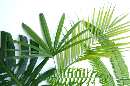 Variety of tropical leaves