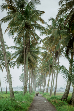 motorcycle in coconut tree country road
