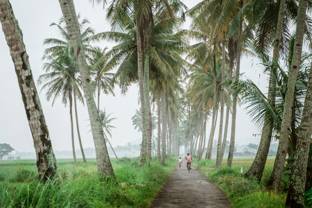 father and son ride bicycle in between road with coconut tree in the morning Stock Photo
