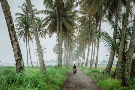 man with motorcycle going between coconut tree in country road