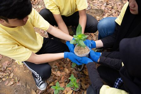 Asian young of volunteers planting trees Stok Fotoğraf