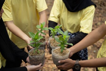 Asian young of volunteers carrying new trees 写真素材
