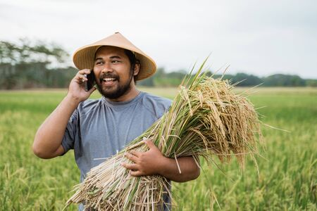 asian farmer making a phone call while holding rice grain