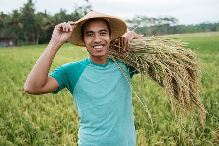 asian farmer with rice grain on hand Stockfoto