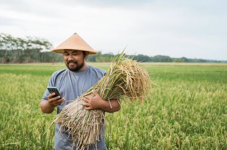 farmer using smart technology gadget for agriculture Imagens