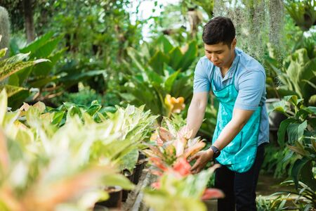 male florist working at the garden Stock Photo