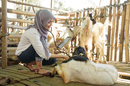 asian muslim veterinarian medical check up farm animal